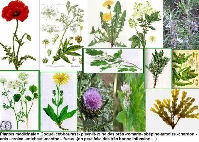 Le monde fascinant des plantes.